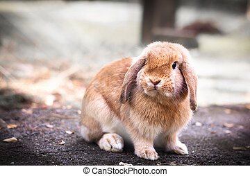 Cute Baby Bunny rabbit - Photo of Cute Baby Bunny rabbit...