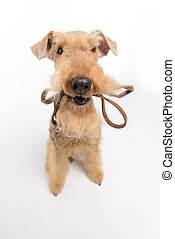 Dog is your best friend - Dog with leather leash Top view...