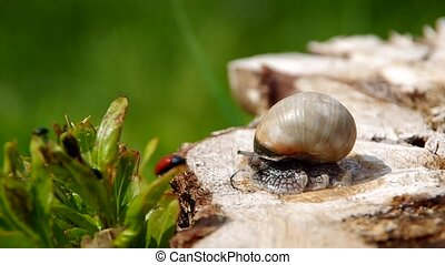 Snail on a tree stump in spring and green background