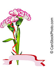 carnation flowers. holiday card