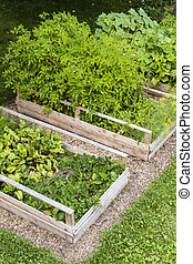 Vegetable garden in raised boxes - Three raised garden beds...