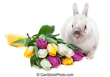 White rabbit with tulips