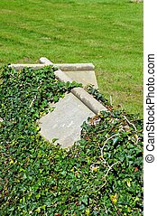 Cross shaped tombstone. - Tombstone partly covered with ivy...