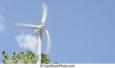Wind power and sprouts - Turning to wind power generator...