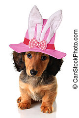 Easter puppy - Longhair dachshund puppy wearing an Easter...
