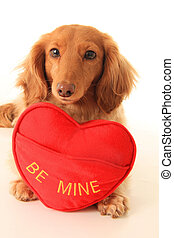 Valentine puppy - Dachshund puppy with a heart shaped pillow...