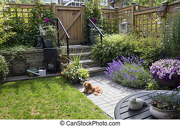 Small garden - Small patio garden with a dachshund dog lying...