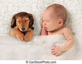 Newborn baby and puppy - Newborn baby and a dachshund puppy...