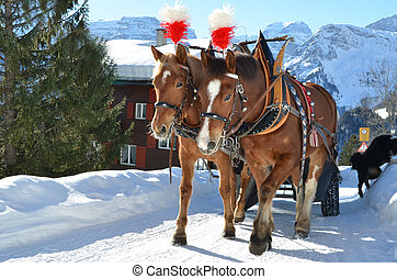 Pair of horses. Braunwald, famous Swiss skiing resort