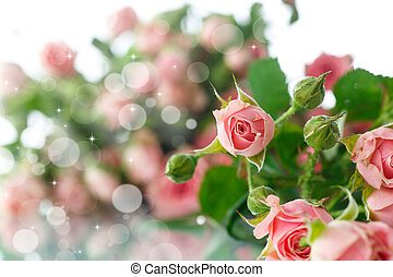 bouquet of pink roses on an abstract background