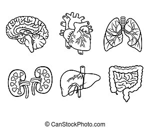 anatomy organs - vector black and white icons of anatomical...