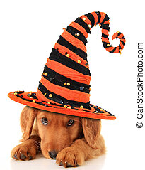 Halloween puppy - Cute puppy wearing a Halloween witch hat.