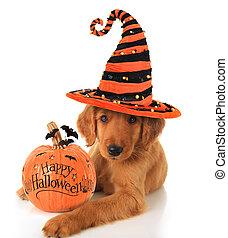 Halloween puppy - Cute Halloween puppy with a pumpkin.