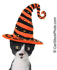 Halloween kitten - Cross eyed kitten wearing a Halloween...