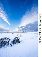 Farmland field under snow - rural nature winter landscape