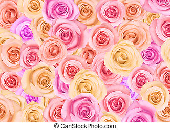 Background of roses - Background of pastel colored roses