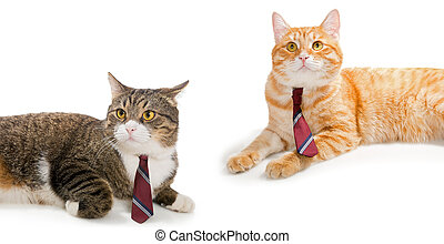 Two cats in ties, isolated on white background