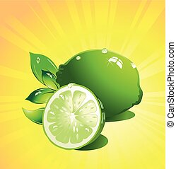 Lime citrus fruit Vector