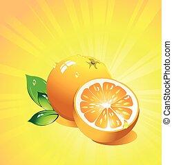 Orange citrus fruit. Vector