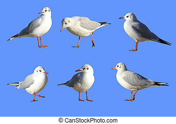 Sea-gulls in different poses with paths selections without...