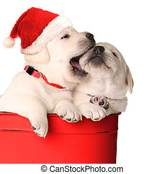 Playfull puppies - Playfull Christmas santa puppies in a red...