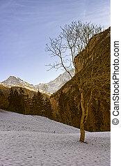 svizzero, Alpino, paesaggio, con, Monch, e, Jungfrau,...