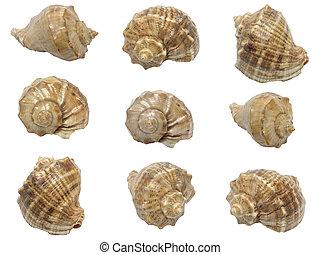 Set of shells of marine molluscs on white