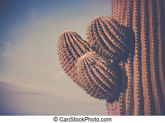 Iconic Cactus tree arms of Saguaro, Scottsdale, Phoenix, AZ