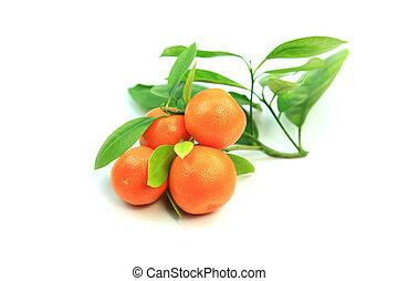 Kumquats - Fresh Kumquat fruits with leaves on white...