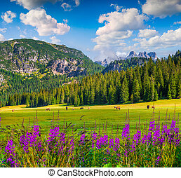 Pasture for horses in National Park Tre Cime di Lavaredo...