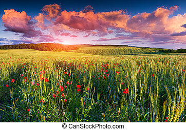 Colorful summer sunrise on the field of wheat