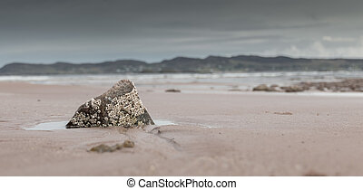 Barnacles on a rock at the quiet Cove Beach, Scotland