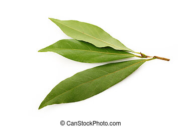 bay leaf on white background