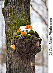Mushrooms on a tree in winter - Mushrooms growing on a tree...