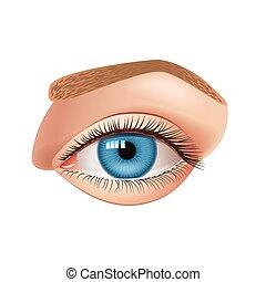 Human eye isolated on white vector - Human eye isolated on...