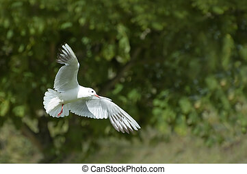white dove; a symbol of peace and purity