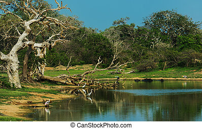 Sri Lanka - Exotic nature in the jungles of Sri Lanka