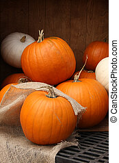 Pumpkins - Pumpkin display for Halloween.