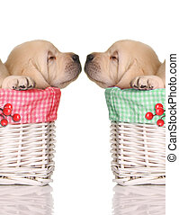 Puppy love, sleeping puppies in red and green Christmas...