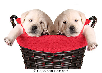 Funny Christmas puppies - Merry Christmas puppies in a...
