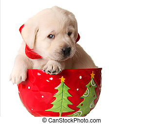 Christmas puppy - Yellow labrador puppy in a christmas mug.