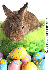 Easter bunny in a basket, surrounded by Easter eggs.
