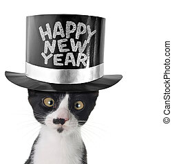 Happy new year kitten - Cross eyed cat wearing a happy new...