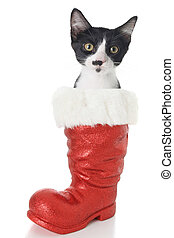 Christmas cat - Black and white Christmas cat in Santa's...