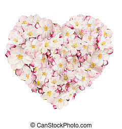 Spring heart made of blossoms, isolated on white background