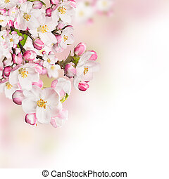 Spring blossoms on white background Free space for text