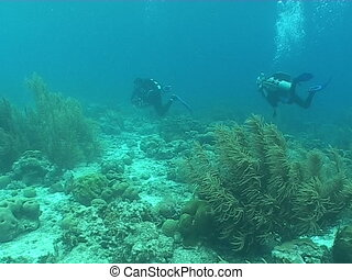diver underwater diving video - underwater diving video