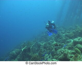 divers underwater diving video - underwater diving video