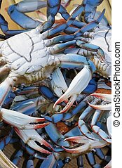 Chesapeake Blue Crabs - A collection of plastic Chesapeake...