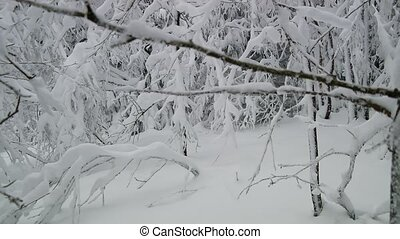 Tree With Snow and fog - Video footage of a trees in Winter...